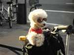 Sunglasses_dog